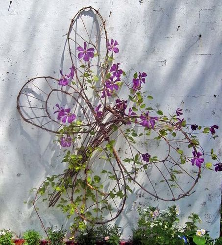 Willow butterfly, Star of India Clematis by Willow Arts Chris, via Flickr