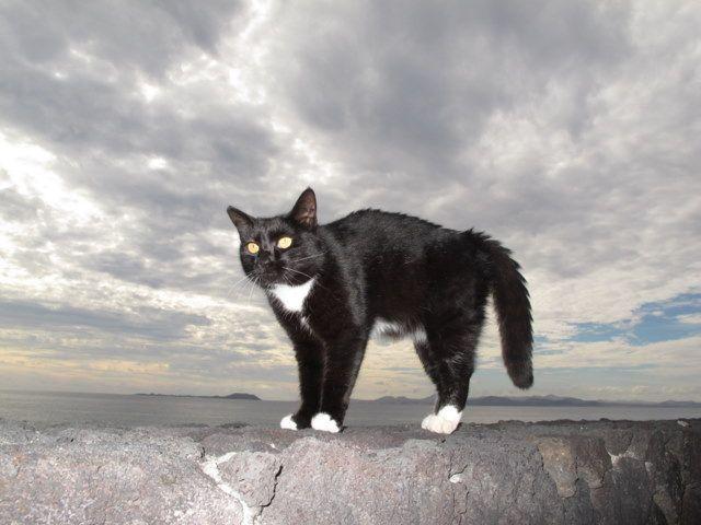 Mobili gatto ~ Ogni mattina un gatto si sveglia e sa che dovrà correre più veloce