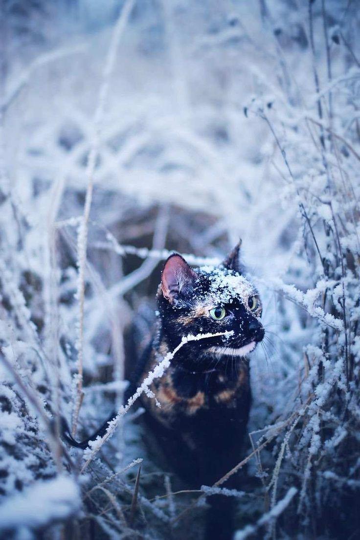 Magdalena Grześkowiak Captures Her Cat Through The Seasons #inspiration #photography