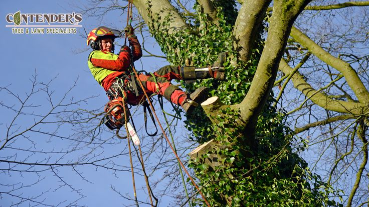 Tree and Lawn Care Specialist near me Tree and Lawn Care