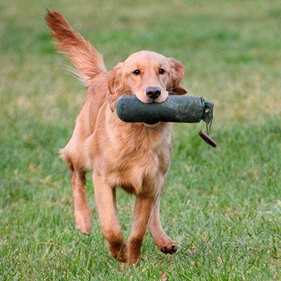 Buy Gundog Training Made Easy Book Online - http://www.dog-ramblers.co.uk/about-us/ #GunDogTraining