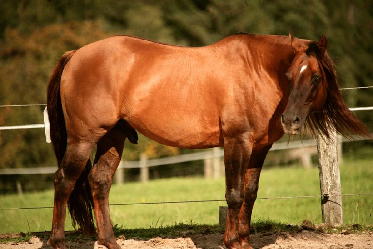 157 best Horse Color Galore: Dun images on Pinterest ...