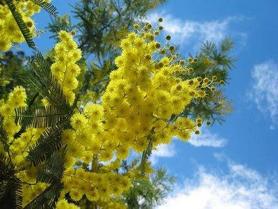Festa della donna: diritti e mimose.  Oggi, come tutti ben sanno, è la Festa della donna. Ma siete sicuri di conoscere le origini di questa ricorrenza?