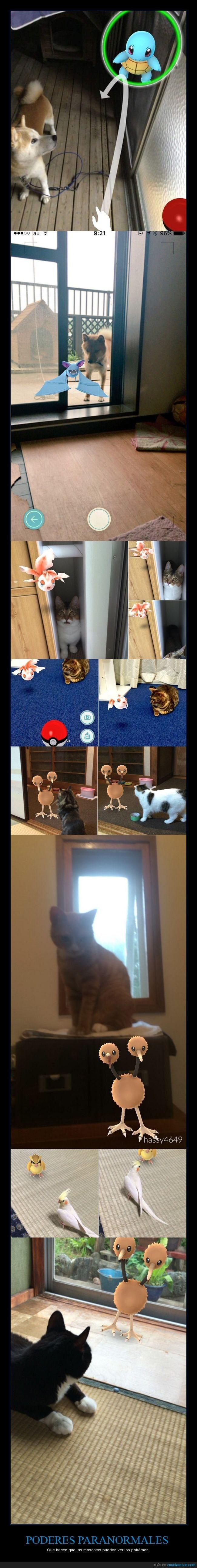 Existe un rumor en Japón según el cual las mascotas pueden ver los pokémon - Que hacen que las mascotas puedan ver los pokémon