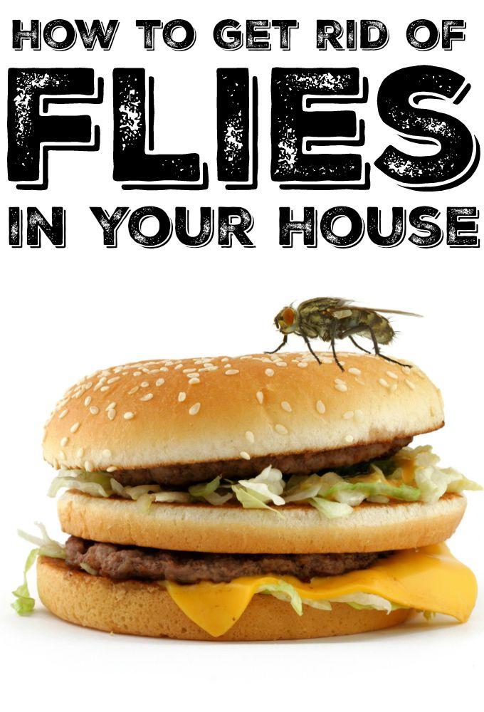 25 Unique Get Rid Of Flies Ideas On Pinterest Flies