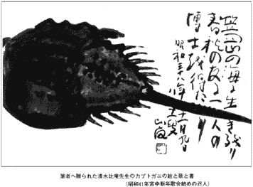 In Japan, the horseshoe crab (Kabutogani) has long been legendary. In ages past brave warriors who honorably sacrificed their lives in battle were said to be reborn as horseshoe crabs, their shells samurai helmets, eternally crossing the bottom of the sea.