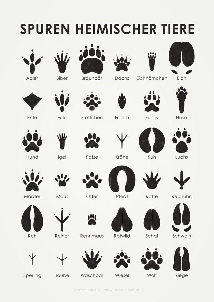 Spuren einheimischer Tiere. Tierspuren Poster von Iris Luckhaus - Hacks und Tipps für das nächste Camping und Wander Abenteuer