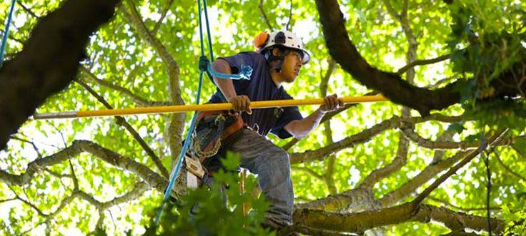 Tree trimming sewell nj tree care tree removal tree