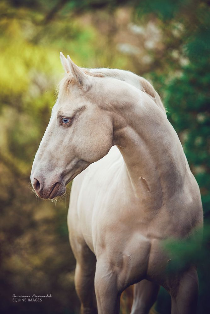 Best 25+ Horse head id...