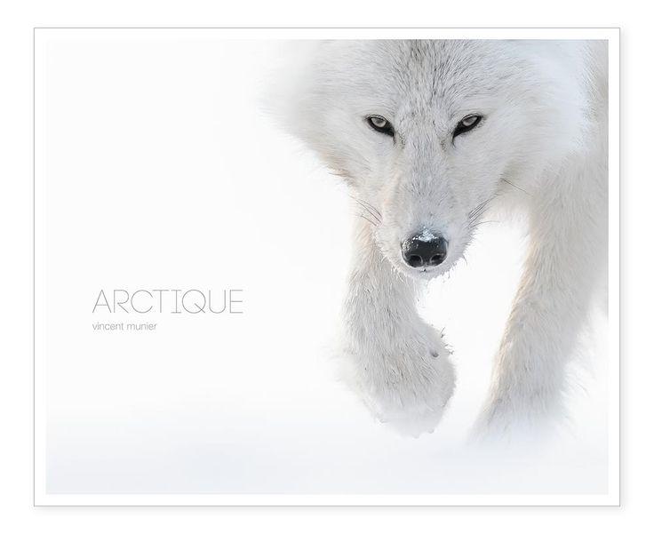 Arctique - Vincent Munier