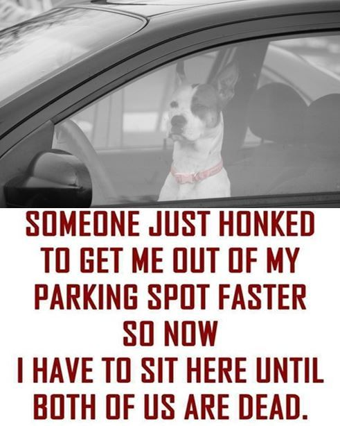 FUNNY PICTURES RELATABLE  http://omgshots.com/3676-17-funny-memes-pictures-that-you-can-totally-relate-to.html
