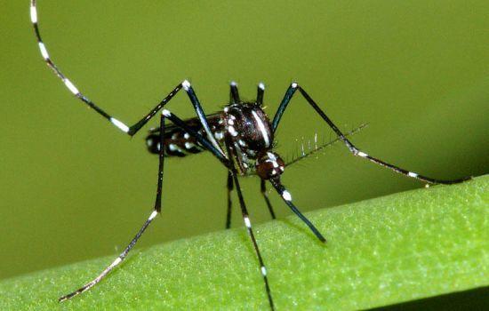 Rimedi e trappola contro le zanzare: sei alternative naturali