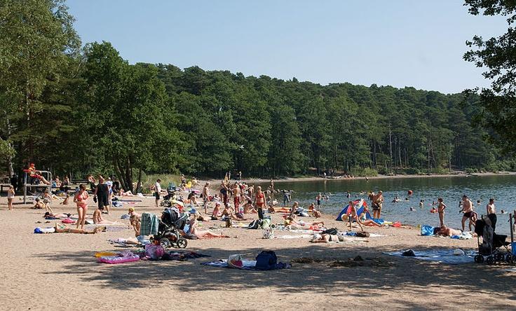 Kallahden ulkoilupuisto on mäntymetsäinen, hiekkarantainen niemi.