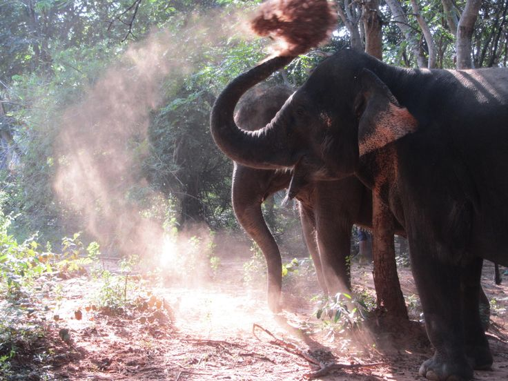 Observing elephant behaviour and interaction