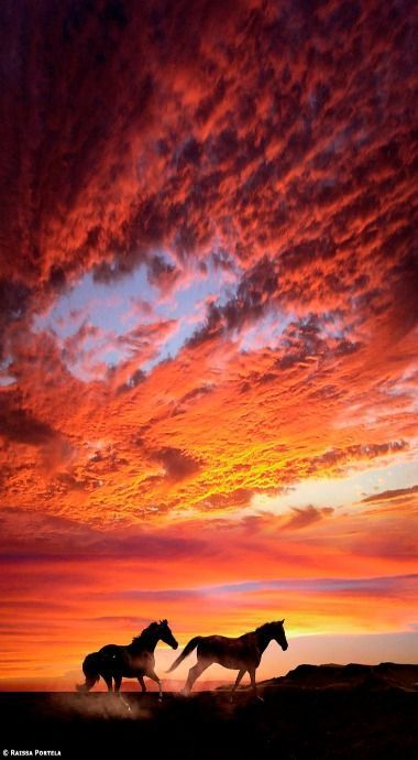 Sillouette of horses running across the field at fiery red golden sunset. Massive clouds glowing from the sun. Please also visit www.JustForYouPropheticArt.com for colorful inspirational Prophetic Art and stories. Thank you so much! Blessings!