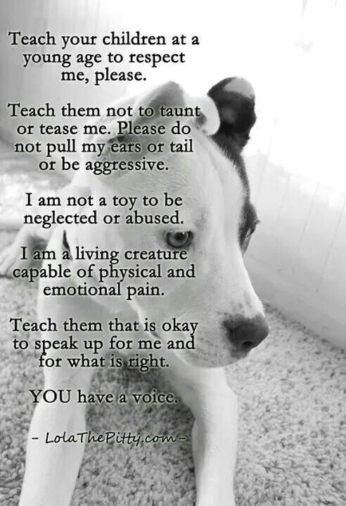 Children need to be taught respect for all animals