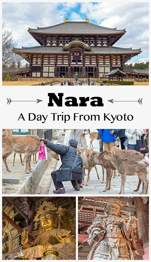 Nara is a beautiful city in Japan with plenty of things to see and do. The highlight is Nara Park, which holds the world famous Todaiji Temple and sacred deer. In addition, Nara is less than one hour away from Kyoto, making it the perfect day trip for those staying in Japan's city of temples. Learn more at PiccaPixel.com