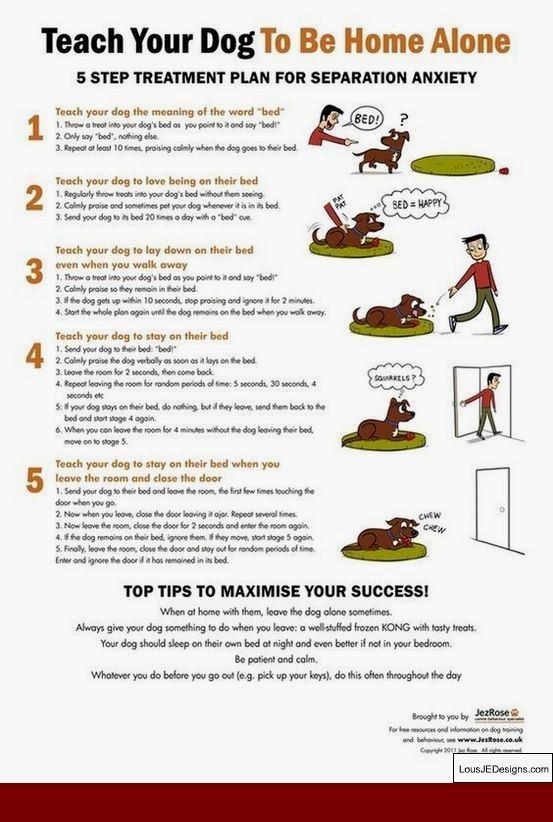 How To Train A Guard Dog Pitbull And Pics Of How To Train Your Dog
