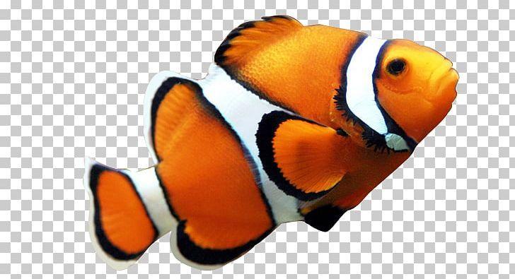 Fish Png Fish Psd Texture Png Galaxy Painting