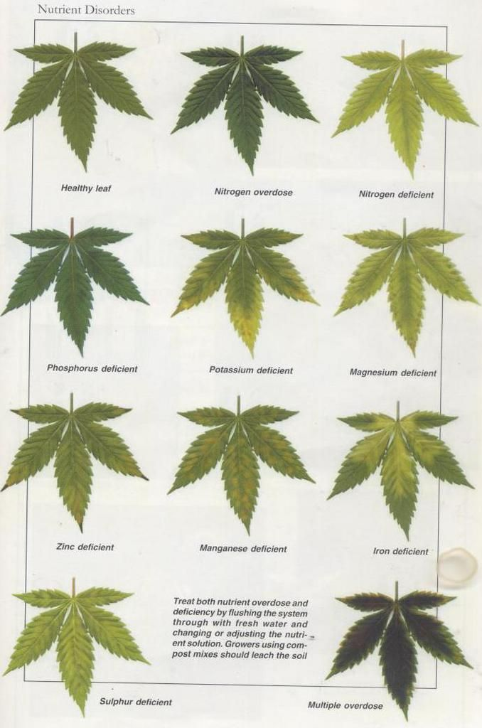 Joe's Fresh Guide to Sick Plant Diagnosis - Cannabis Infirmary - International Cannagraphic Magazine Forums