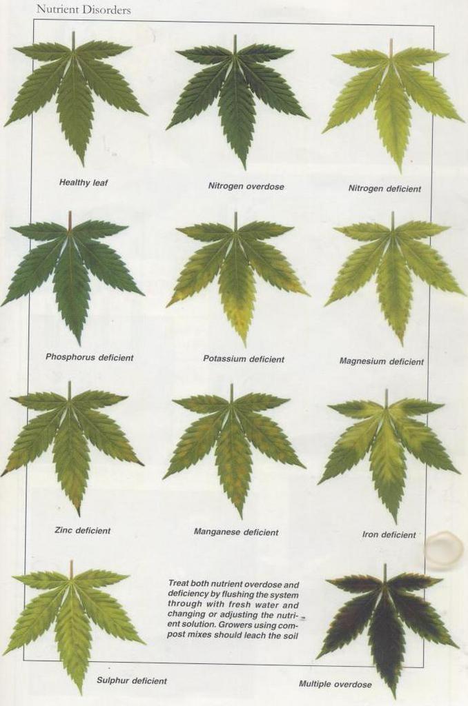 the effects of marijuana on problem The adverse effects of marijuana (for healthcare professionals)  sensory perception, attention span, problem  separate and combined effects of marijuana and.