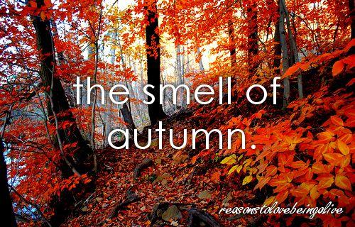 <3 autumn: Favorite Time, Autumn Leaves, Autumn Fall, Colors, Natural Walkshik, Favorite Seasons, Autumn Beautiful, Fallmi Favorite, Autumn Favorite