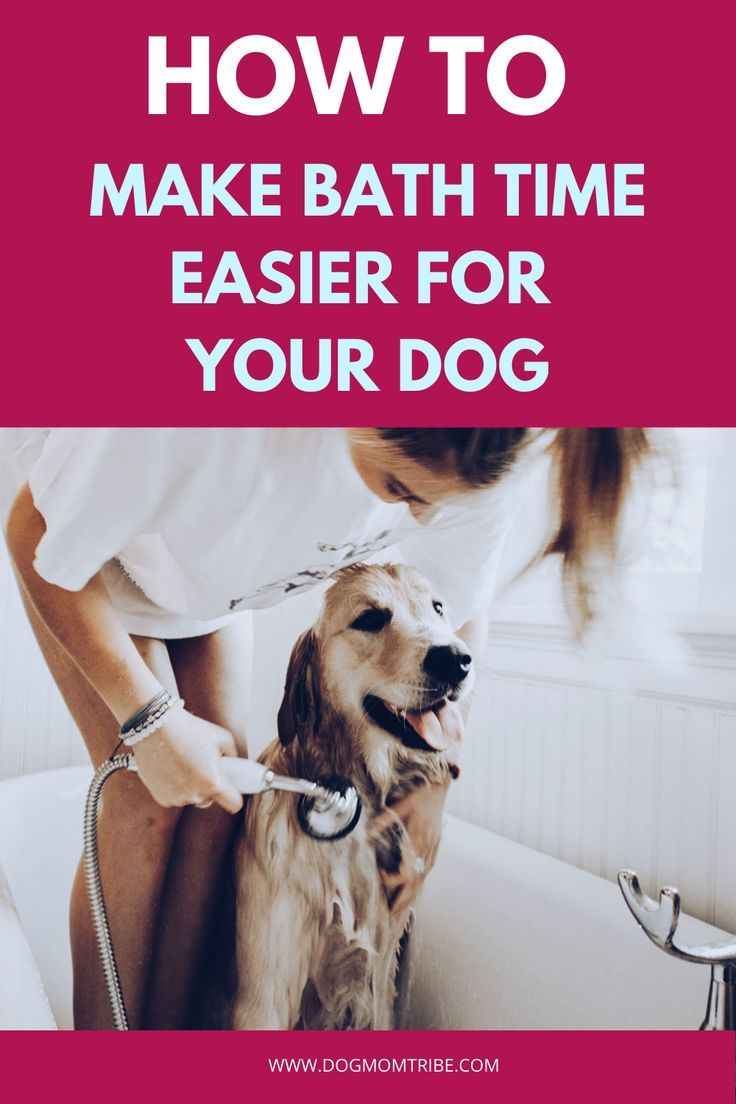 Are You Ready To Make Bath Time Easier For You And Your Dog Take