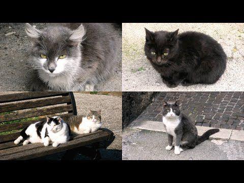 Gatti e gattini bellissimi, teneri, buffi, strani, neri (video con foto)