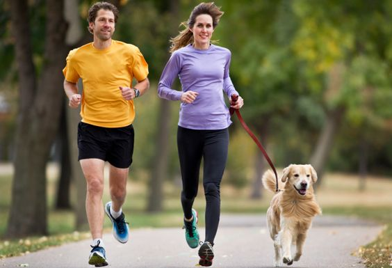 Simple tips for teaching your dog to run on a leash #runningcompanion