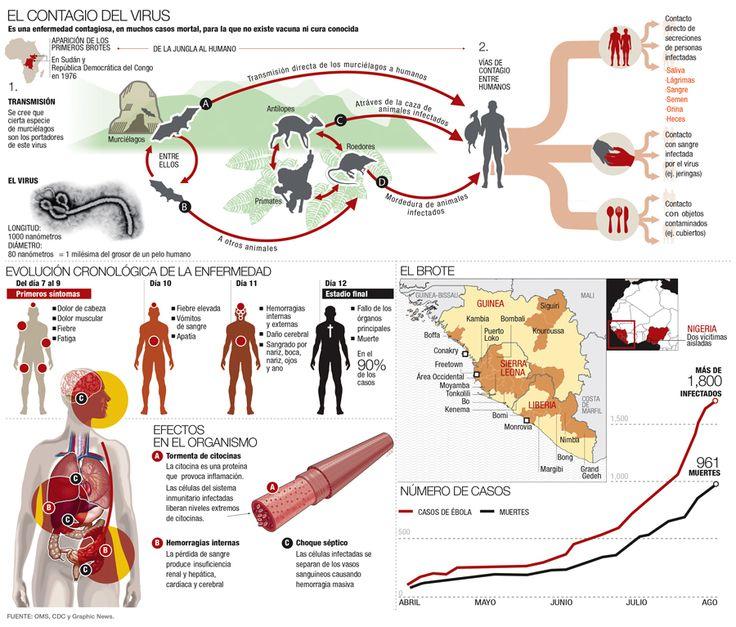 Infografía Virus Ebola http://interactivos.informador.com.mx/internet/infograficos/ContagioVirusEbola.jpg