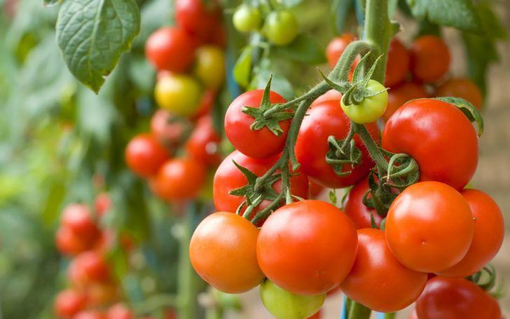 Los 6 vegetales más fáciles de cultivar para que hagas tu primer huerto de vegetales | Upsocl Verde
