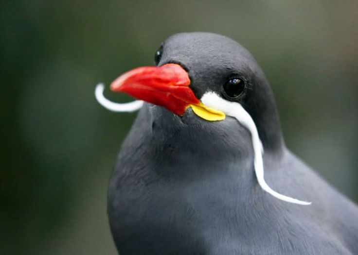 15 der schönsten Vögel der Welt (Bilder, Videos…)   JustBirding ….   – Beautiful birds
