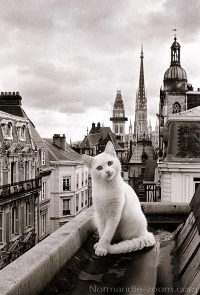 A cat in Paris - the cutiest thing ever!