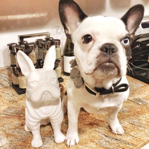 Sophia Grace finds a french bulldog twin: a Z Gallerie coin bank!