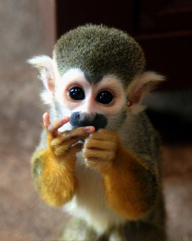 Cute Exotic Animals 10 Cutest & Most Cuddly Exotic Pets