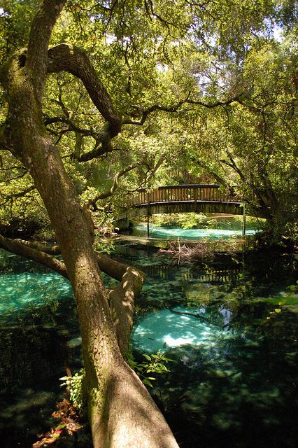 Fern Hammock Springs in Florida- Outside of Ocala, I want to check it out!