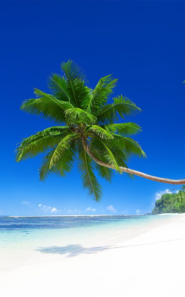 Leaning Palm Tree Beach Wallpaper Mural With Images Beach
