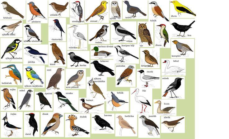 obrázky ptáků - Hledat Googlem