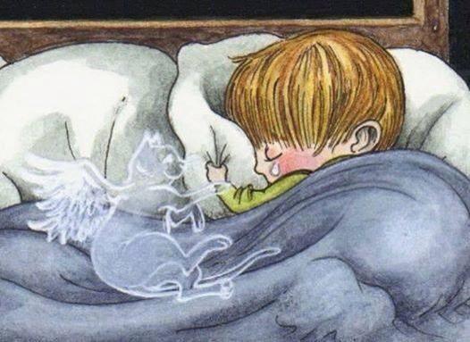 Para los que alguna vez amamos a un animal y sentimos profunda tristeza al perderlo: ...Recuerda que el tiempo que estuvo a tu lado, lo vivió con los más puros sentimientos, y ese amor incondicional no acabó en el mundo físico, sólo se transformó y ahora vive en tu corazón, te cuida con la misma dedicación y cariño de siempre.  Las experiencias que vivieron juntos nunca morirán!!