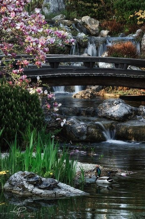 .: Photos, Waterfalls, Waterfall Bridge, Nature, Beautiful Places, Beauty, Vienna Austria, Bridges, Garden