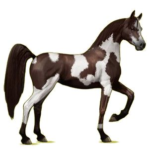 Sтαя Ǥαʓɛя, Riding Horse Arabian Horse Light Gray #1 - Howrse