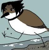 Sasuke Bird