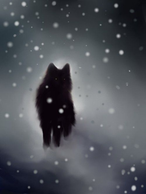 Black Wolfin Winter, im I real or is the wolf you see just a figament of your imagination