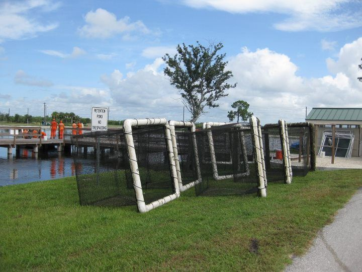 46 Best Fish Raised In Florida Fish Farm Ponds Images On Pinterest Florida Fish Ponds And