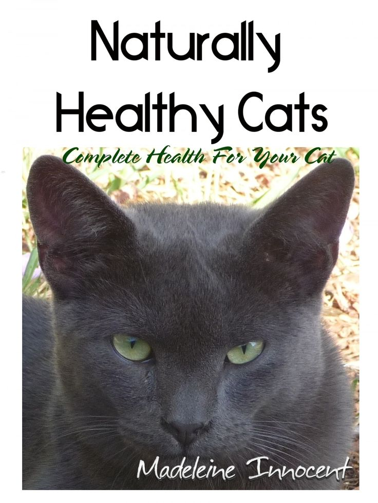 Low Protein Cat Food & Kidney Failure Most veterinarians