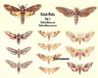 22 best vintage usa postcards images on pinterest vintage moths insects set 1 instant digital download printable collage sheet scrapbook mixed media junk journal fandeluxe Image collections