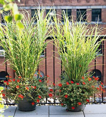 17 top ornamental grasses for Ornamental grass in containers for privacy