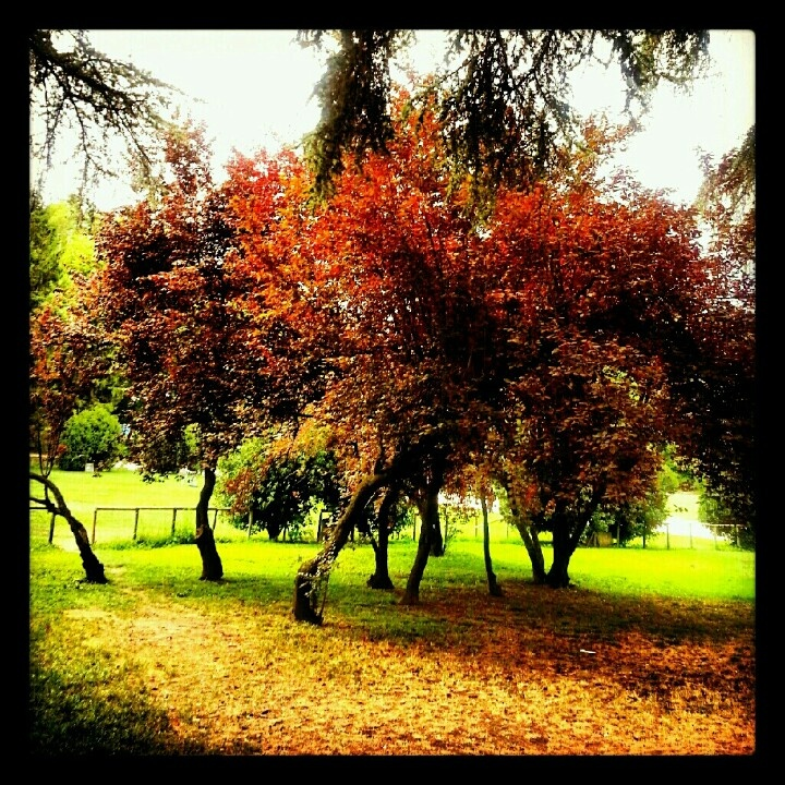 Autumn shades in milan today