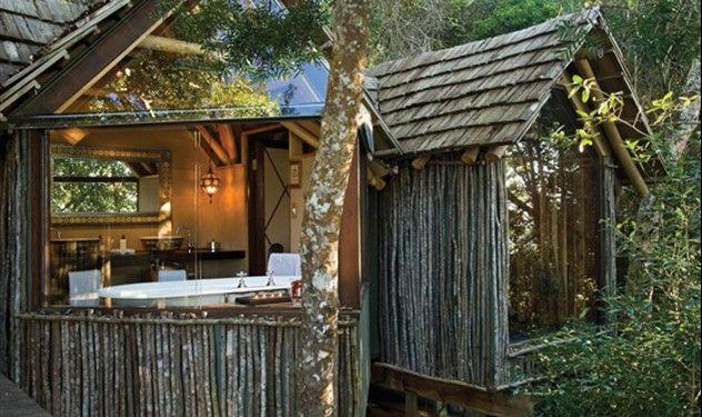 Phantom Forest - Knysna, South Africa