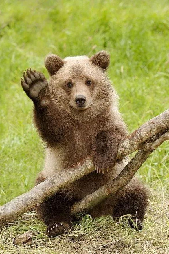 постановочных медвежата картинки привет казенное общеобразовательное